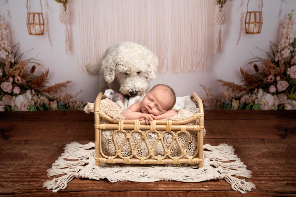 newborn_session_photographer
